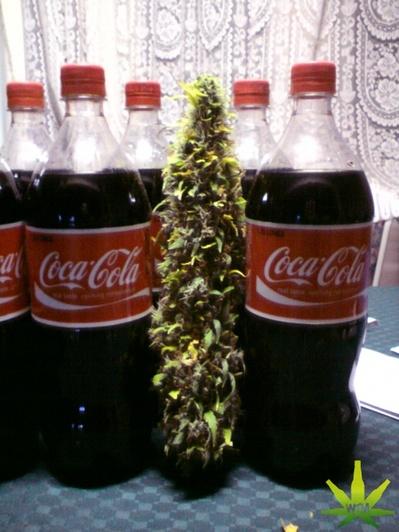 coca-cola-mari-juana-thumb-400x532